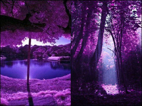 Bosque morado China