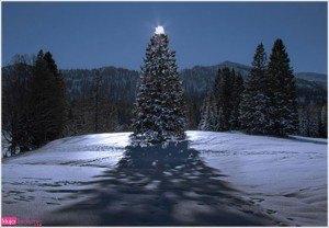postal navideña, árbol de navidad, foto de invierno, felicitación de navidad, feliz navidad, año nuevo 2016, marry christmas tree