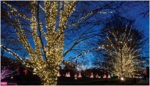Postal navidad, paisaje navideño, foto invierno, año nuevo, felicitación navidad, imagen árbol navidad