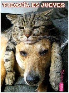 frase para un jueves con imagen perro y gato