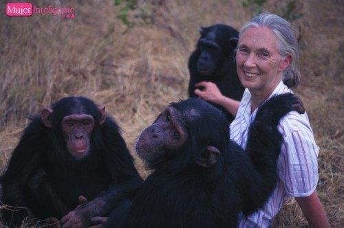 goodall con chimpances