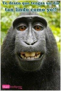 imagen animal feo para felicitar el dia de la semana