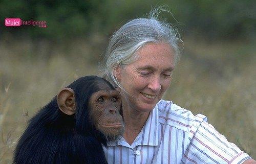 Los chimpancés salvajes de jane goodall