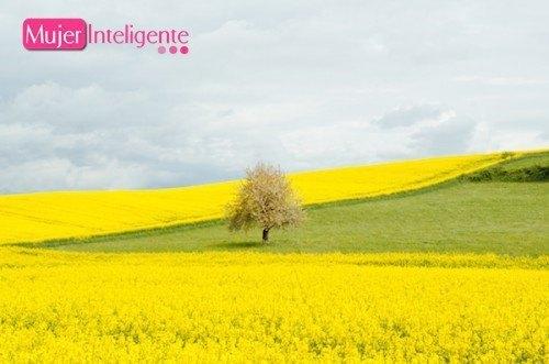 Cómo aliviar las alergias primaverales