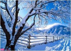 Postal navidad, paisaje navideño, árbol de navidad, nieve