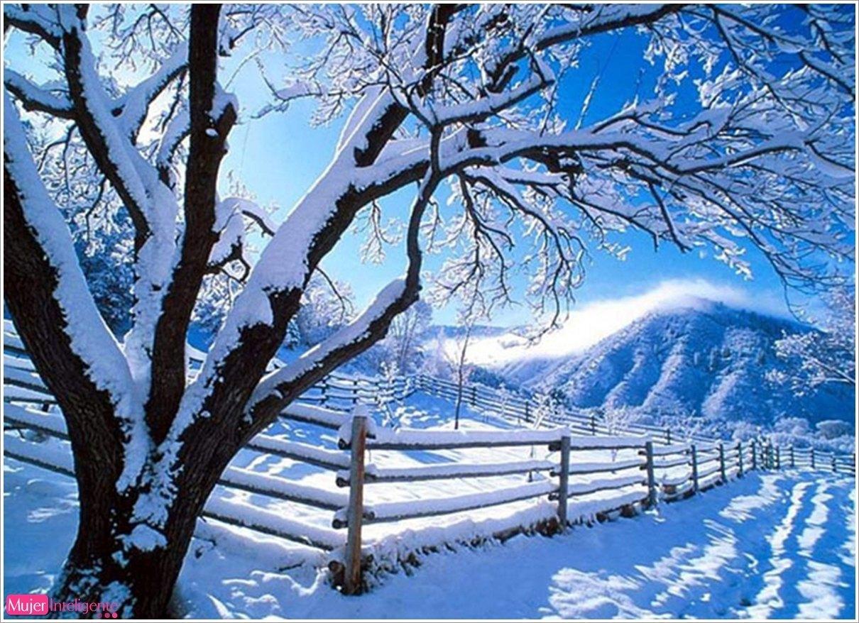 imagen postal navidad paisaje navideo rbol de navidad nieve
