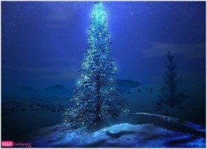 tarjeta navideña, postal, árbol de navidad, foto de invierno, felicitación de navidad, feliz navidad, año nuevo 20156 marry christmas tree